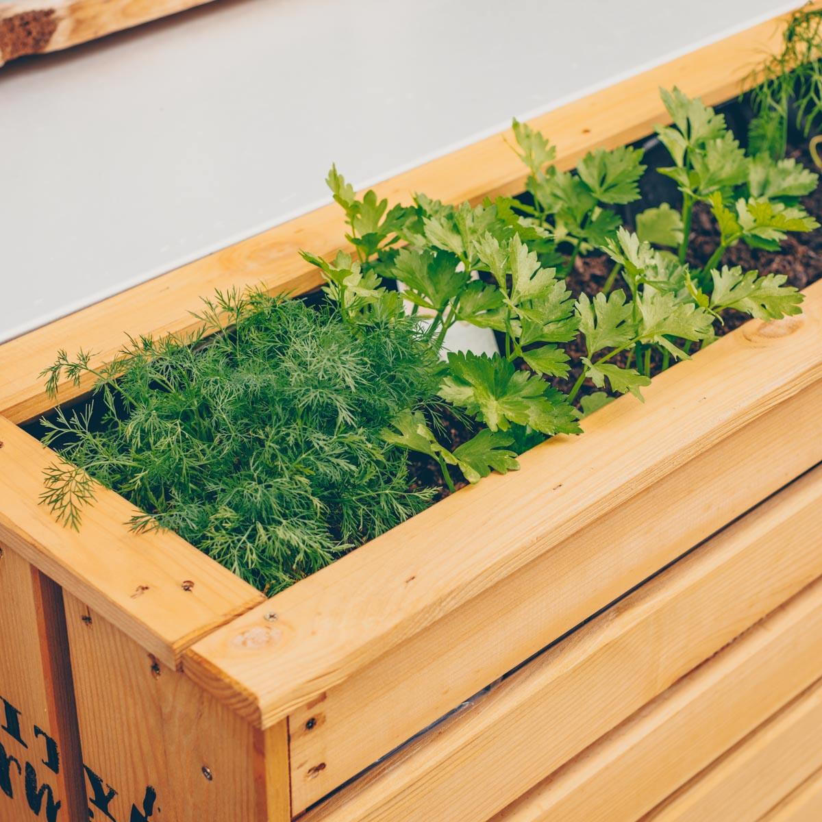 City Farming - mein grüner Balkon