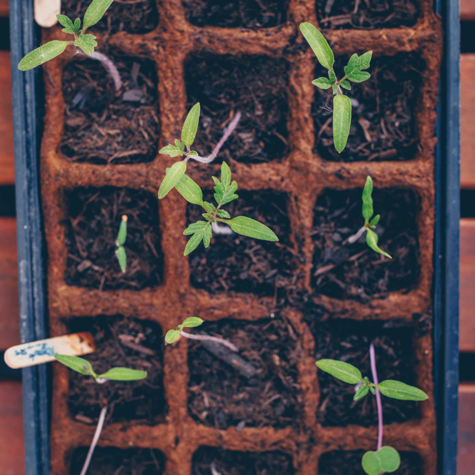 Mein City Farming Paradies - alles zu unserem Hochbeetgarten