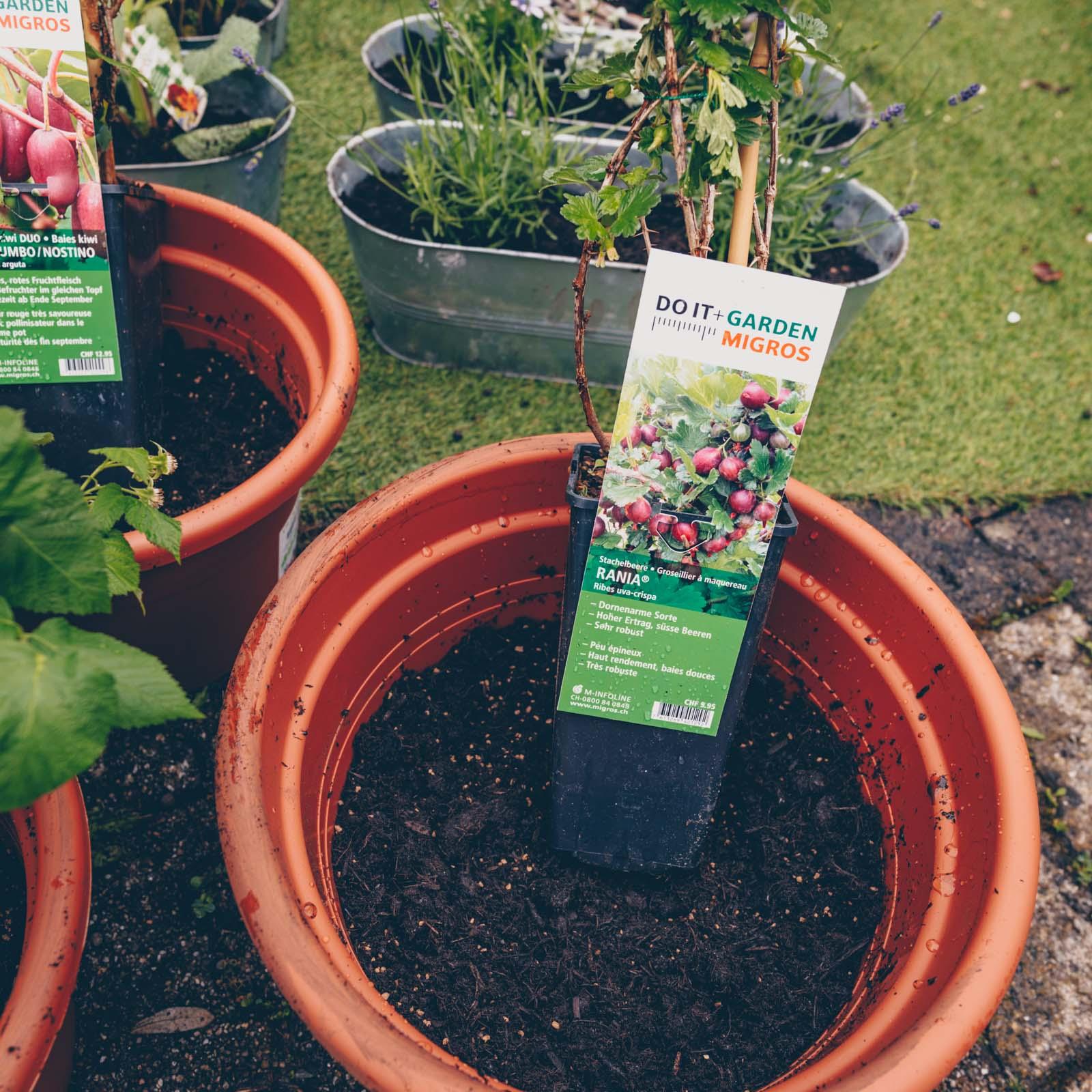 Früchtegarten für Kinder