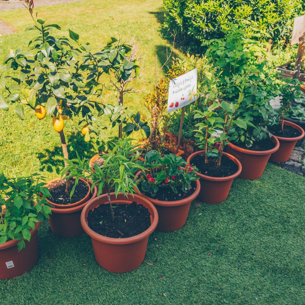 Mein City Farming Paradies – alles zu unserem Hochbeetgarten